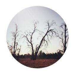 sherjc.com_dry_trees_cir