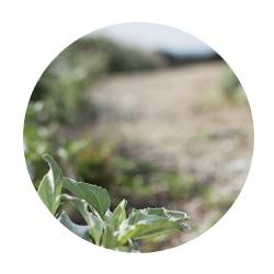 sherjc.com_leaf_road_cir